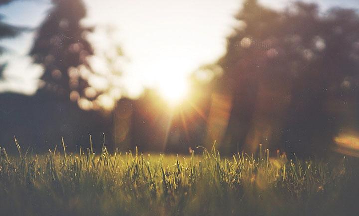 En bild på en gräsmatta och solen lyser i bakgrunden.